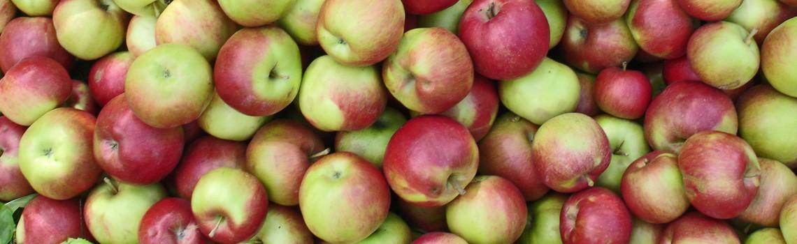 Des Apfels Kern